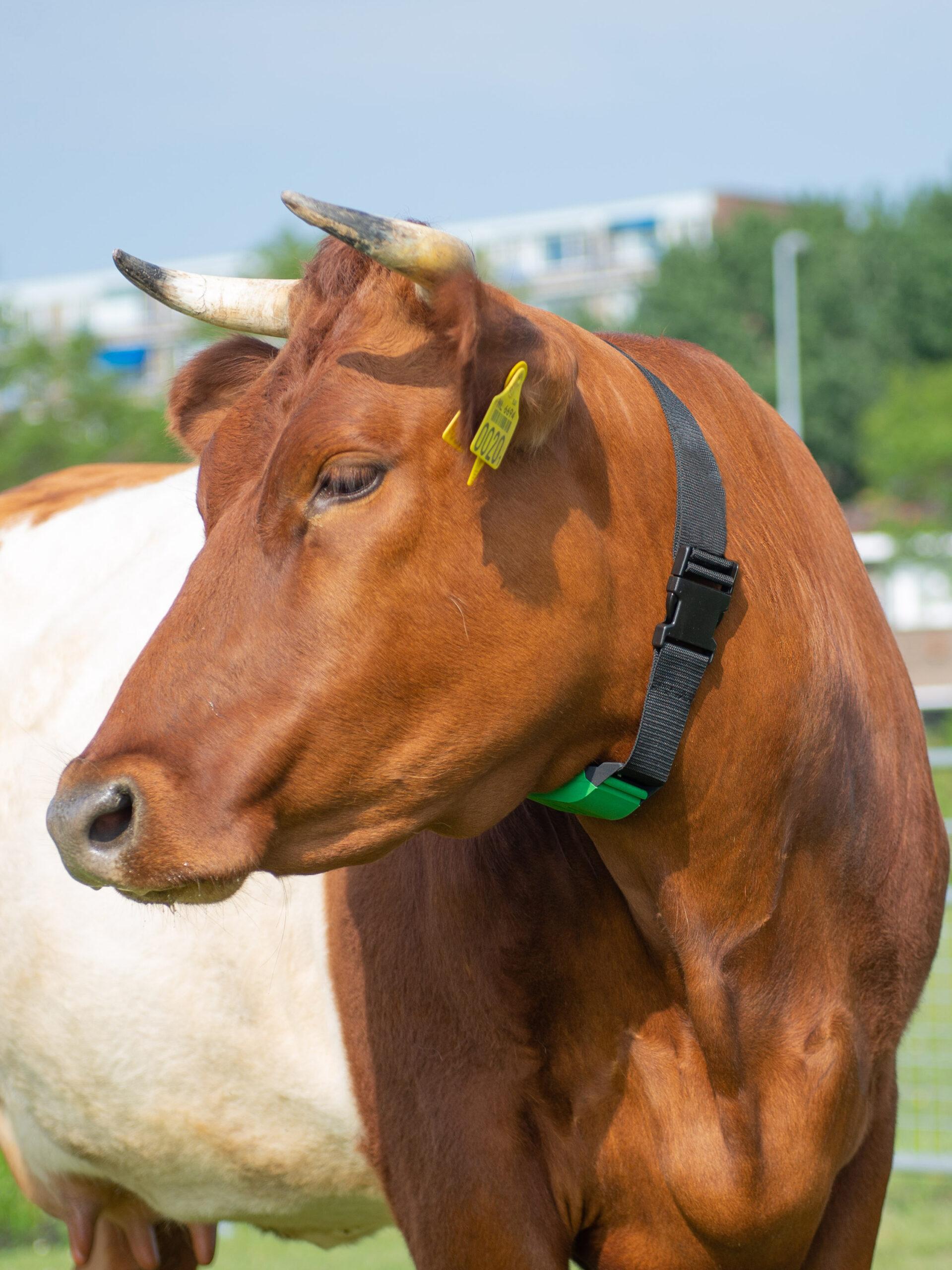 Animal tracker, locatiebepaling, veiligheid, diefstalpreventie